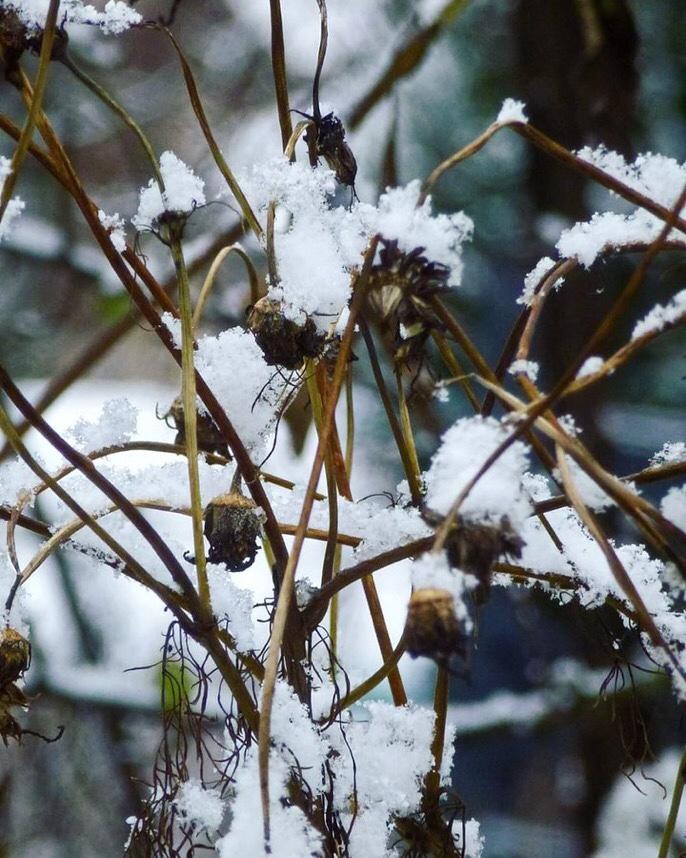 Strukturen - #Cosmeen  im Schnee