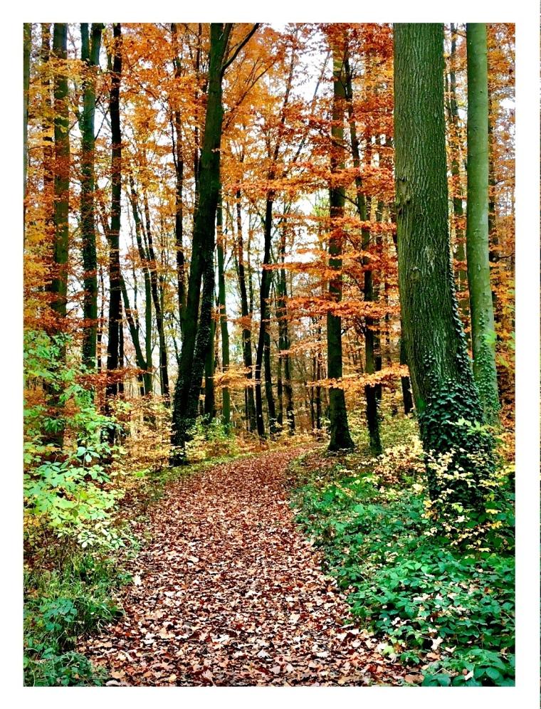 herbstlicher Waldweg, Mit Laub bedeckt. seitlich kahle Bäume.